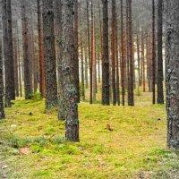 Волшебный лес :: Дмитрий