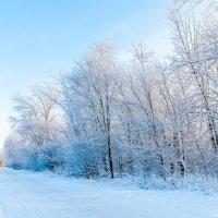 Зимние зарисовки :: Александр Бахмутов