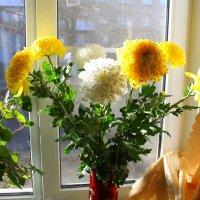 Время желтых хризантем.. :: ЕВГЕНИЯ