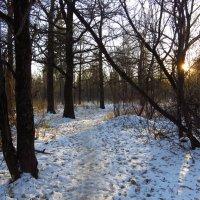За неделю до зимы :: Андрей Лукьянов
