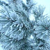 Зима :: Александр Тышко