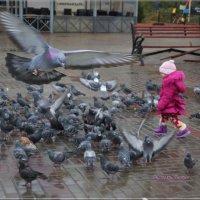Про сизарей. :: Anatol Livtsov