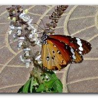 Этюд с бабочкой. :: Чария Зоя