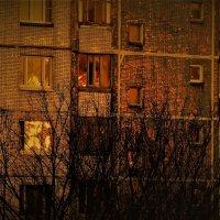 Вечернее золото. :: Алексей Халдин