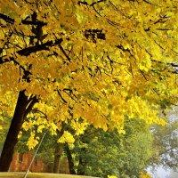 Осень в Молочном.Во дворе :: Валерий Талашов