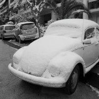 Под снегом. :: Оля Богданович