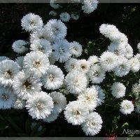 naum.lidiya,краски,красота,солнце,свет,тень,цвета,город,лето,цветы,цветение,макро,клумба,дача, :: Лидия (naum.lidiya)