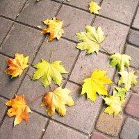 Опавшие листья клена :: татьяна
