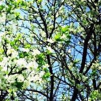 Весна :: Алина Цыбанова
