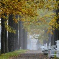 Утро туманное..... :: Юрий Цыплятников