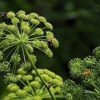 Приметы лета - оттенки зеленого цвета :: Екатерина Торганская