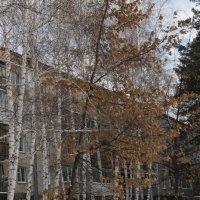 Бийск. Дубы в ноябре 2016. :: Олег Афанасьевич Сергеев