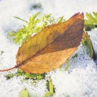 Утро порадовало снегом и предновогодним настроением :: Игорь Касьяненко