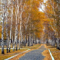 Засверкали в длинных косах жёлтых листьев огоньки. :: Людмила