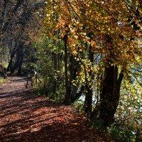 На берегу задержалась осень ... :: Владимир Икомацких