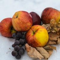 Яблоки на снегу. :: Владимир