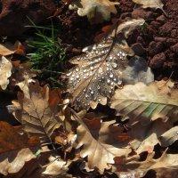 Капельки росы, как чистые алмазы :: Наталья Джикидзе (Берёзина)