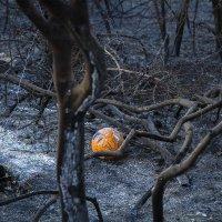 Хайфа после пожара. :: Maria Miller