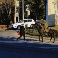 Пятигорск,люди,кони,торопятся перейти.. :: Nik Зонов