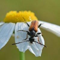 Похождения  жука :: Геннадий С.