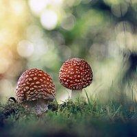 ...спорный вопрос, о размножение грибов..) :: Лилия .