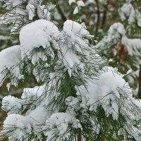 26 ноября - в Ташкенте опять зима... :: Светлана