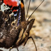 Бабочка :: Данила Навиков