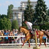 акробатика на коне :: Олег Лукьянов