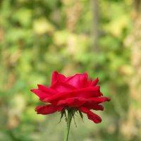 Цветок :: Андрей Мартюшев