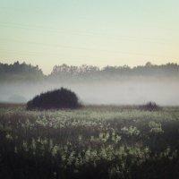вечерний туман :: оксана