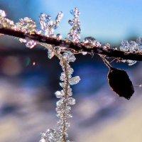 Бриллианты зимы :: Геннадий Г.