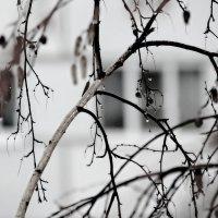 А у нас дождь... 28.11.2016 :: Валерия  Полещикова