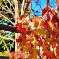 Осень в Израиле :: SVET _ LANA M