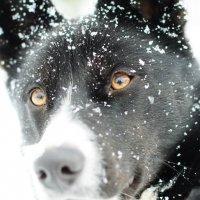 ...эти глаза... :: Николай Масляев