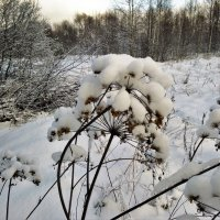 Зимний этюд :: Николай Масляев