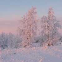 в лучах восхода :: Yuri Mekhonoshin