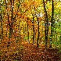 Осенний лес :: Михаил Шабанов
