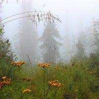 Путь в тумане :: Сергей Чиняев
