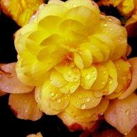 цветок :: Наталья Сазонова