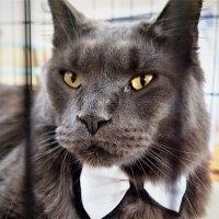 Выставка кошек :: Николай Сапегин