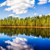 Карелия Лесное озеро (Ламбушка) :: Маргарита Си