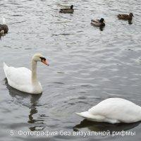 Лебеди на пруду :: Татьяна Помогалова