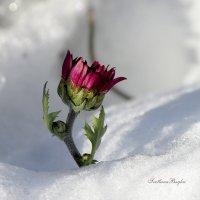 Прощание с осенью. :: Svetlana Baglai