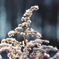 Белые одежды :: Татьяна Баценкова
