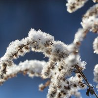 Зимние цветы :: Татьяна Баценкова
