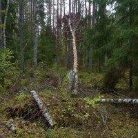В лесу :: leo yagonen