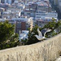 Чайка над городом :: Мария Самохина