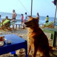 Собака караулит курочку в кляре.Таиланд Паттайя! :: Ivan G