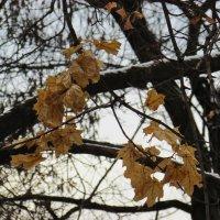 """Я ухожу...""""-сказала осень.""""Пора...""""-шепнула в след зима. :: Марина Ринкашикитока"""