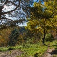 В лесу осенью :: Владимир Безбородов